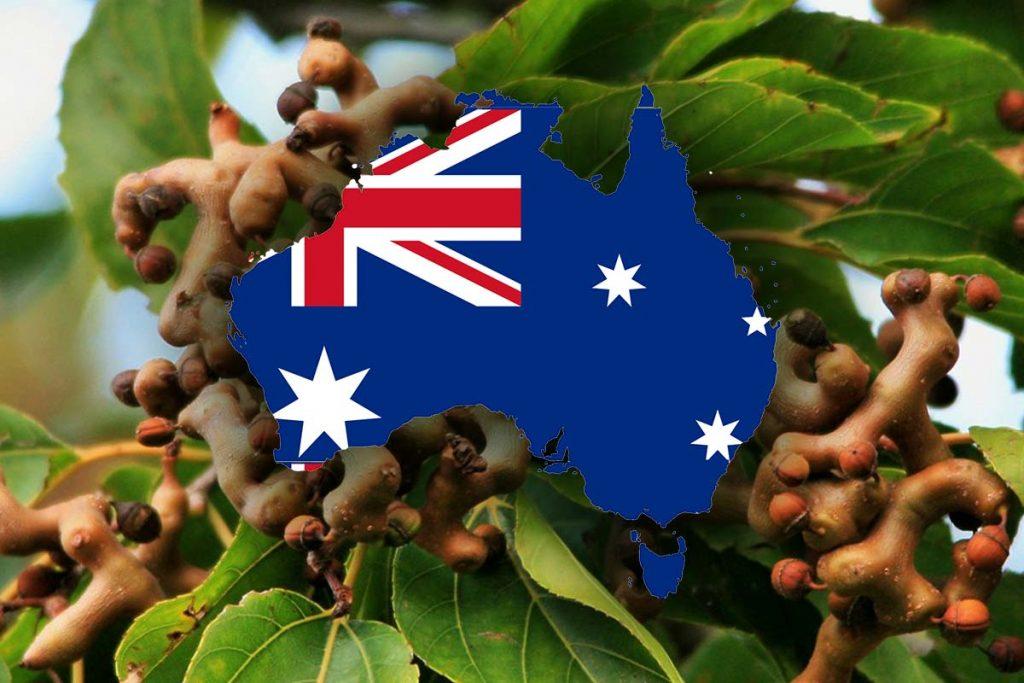 Dihydromyricetin in Australia